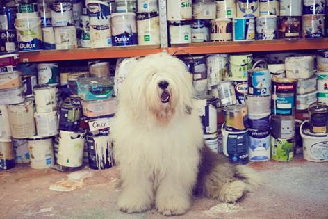 AkzoNobel Великобритания открывает второй центр по переработке краски